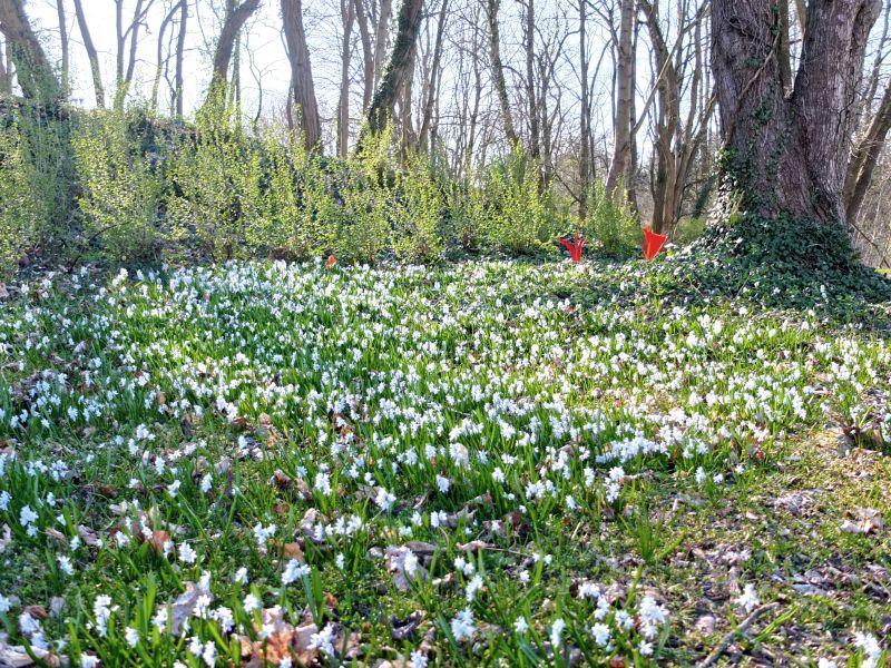 Frühling im Park von Annenwalde